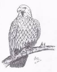 shan u0027s art bald eagle pencil sketch