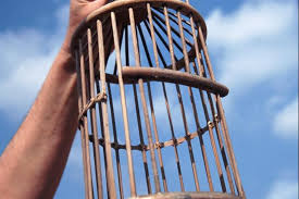 uccelli in gabbia come costruire una gabbia per uccelli fai da te lettera43 it