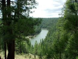 Arizona forest images Region 3 special places jpg
