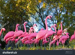 Flock Very Plastic Flamingos Forest Stock Photo 9827518