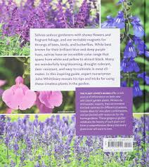 the plant lover u0027s guide to salvias the plant lover u0027s guides