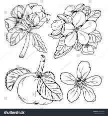 set blossom apple tree branches flower stock vector 422540248