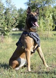 belgian malinois en espanol adjustable training dog harness for malinois u20ac65 9