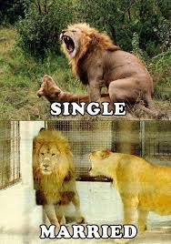 Lion Sex Meme - being single vs being married your body changes memes for more