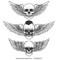 skull and wings stock images royalty free images vectors