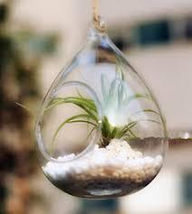glass terrarium containers online hanging glass terrarium