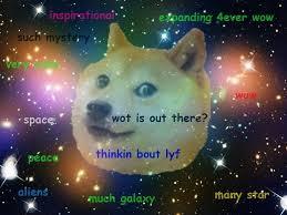 Doge Meme Meaning - doge animals australia unleashed