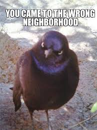 Angry Wolf Meme Generator - the real angry bird weknowmemes generator