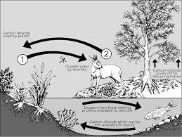 carbon cycle illustration used in gr 4 6 natural sciences u2026 flickr