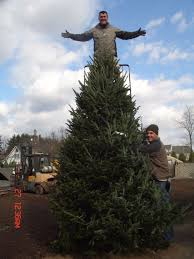 Christmas Tree Stores In Nj Halls Garden Center U0026 Florist Winter Wonderland