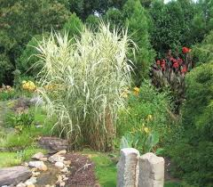 104 best fl ornamental grass images on ornamental