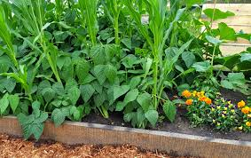 Garden Beds Design Ideas Organic Gardening Raised Flower Bed Ideas Raised Vegetable