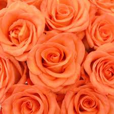 orange roses high and bulk