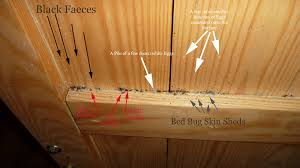 What Does Bed Bugs Eggs Look Like Bed Bug Nests Page 1 Toronto Bed Bug