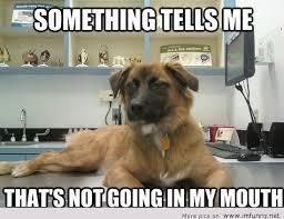 Cute Funny Animal Memes - cute funny dog