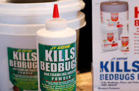 How Can I Kill Bed Bugs Why Bed Bugs Have Made A Horrifying Comeback Vox