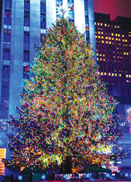 Rockefeller Tree Rockefeller Center Trees Nyc