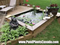 build a garden pond right off your patio deck water garden looks