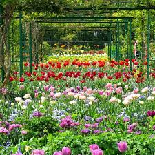 flower places amazing flower places to see in europe world flowers