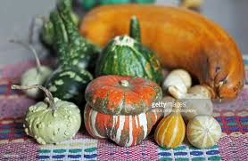 ornamental squash collection stock photo getty images