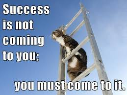 Success Cat Meme - growth mindset memes english success is not coming to you you