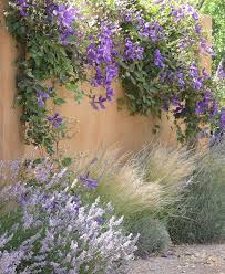 clematis lavender and grasses in a plant bed or dress up a