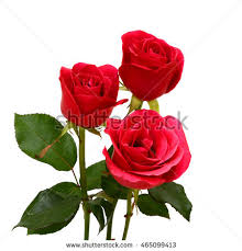 Beautiful Bouquet Of Flowers Beautiful Bouquet Red Rose Flowers Isolated Stock Photo 465099413