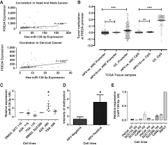 role of host mirna hsa mir 139 3p in hpv 16 u2013induced carcinomas
