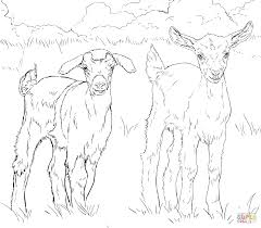 baby goats coloring page free printable coloring pages