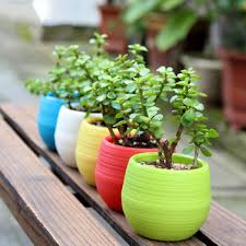 Cute Succulent Pots Cheap Flower Pot 60 Cute Interior And Broken Flower Pot Ideas