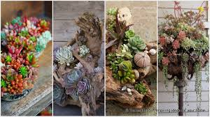 Unique Planters For Succulents by Gorgeous Succulent Planters Instantly Beautifying Your Home