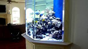 huge fish tank custom 1500 gallon coral reef aquarium youtube