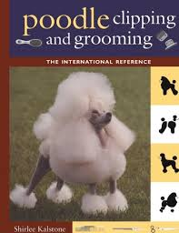 standard poodle hair styles learn poodle haircuts from videos of poodle grooming styles