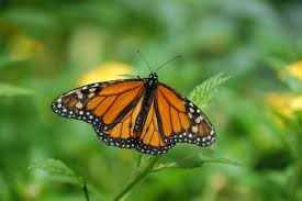 brown black white butterfly on green leaf plant free stock photo