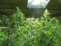 best hps grow lights high intensity discharge hid grow lights