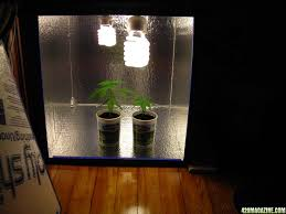 cfl lights for growing weed grow light bulbs for weed do expensive grow lights matter china