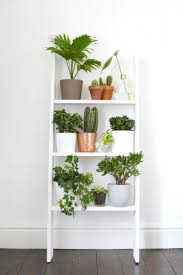 decorating with plants best indoor plant decor ideas on pinterest decorating with plants best indoor plant decor ideas on pinterest shelves ladder
