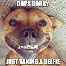Smiling Dog Meme - smiling dog meme generator imgflip