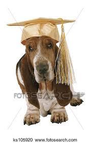 dog graduation cap stock photography of dog wearing graduation cap ks105920 search