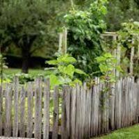 Rustic Backyard Rustic Privacy Fencing Ideas Thesouvlakihouse Com