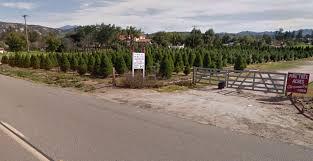 http www familyfunincarlsbadca com pine tree acres christmas