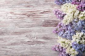 lilac flowers on wood background blossom branch on vintage wood