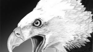 bald eagle drawing hand drawn bald eagle head sketch bird drawing