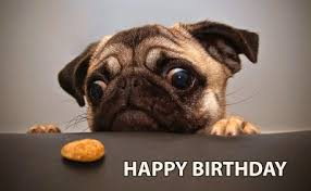Happy Birthday Pug Meme - home birthday wishes quotes