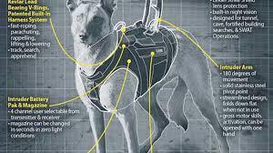belgian shepherd us army the dog that cornered osama bin laden not your standard k9