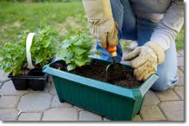 5 easy vegetable gardening tips that will save money