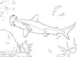 shortfin mako shark coloring page shark coloring pages