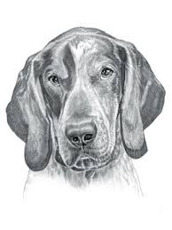 bluetick coonhound youtube bluetick coonhound dog dog drawings and pictures pinterest