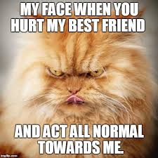 Meme Angry Cat - 20 laughable angry cat meme sayingimages com