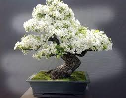 best bonsai trees android apps on play